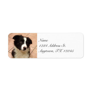 Etiquetas del remite del perrito del border collie etiqueta de remite