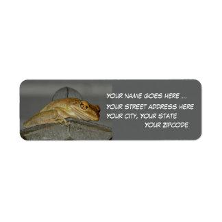 Etiquetas observadas grandes del remite de la rana etiquetas de remite