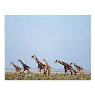 Etosha National Park, Namibia 2 Postcard