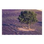 EU, France, Provence, Lavender fields 3 Art Photo
