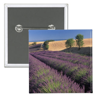EU, France, Provence, Lavender fields 3 Button