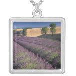 EU, France, Provence, Lavender fields 3 Pendants