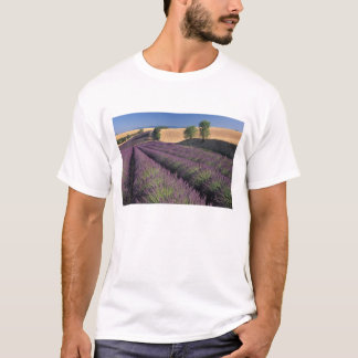 EU, France, Provence, Lavender fields 3 T-Shirt