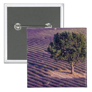 EU, France, Provence, Lavender fields Button