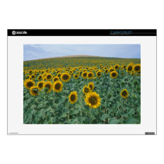 "EU, France, Provence, Sunflower field 15"" Laptop Skins"