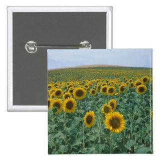 EU, France, Provence, Sunflower field Button