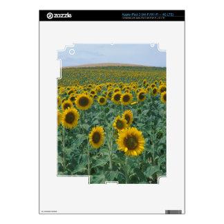 EU, France, Provence, Sunflower field iPad 3 Decal
