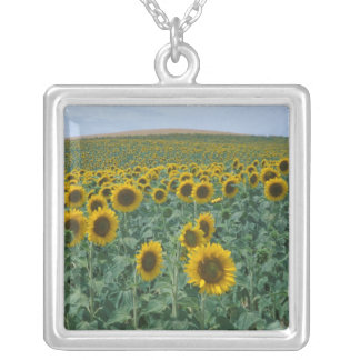 EU, France, Provence, Sunflower field Silver Plated Necklace