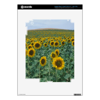 EU, France, Provence, Sunflower field Skin For iPad 3