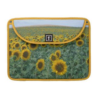 EU, France, Provence, Sunflower field Sleeve For MacBook Pro