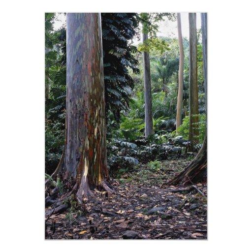 Eucalipto pintado de la corteza, Maui, Hawaii Invitación 12,7 X 17,8 Cm