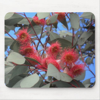 Eucalypt Flowers Mouse Pad