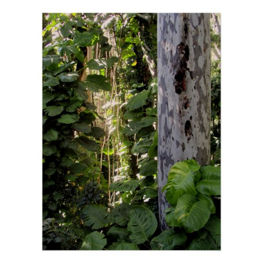 Eucalyptus and Philodendron Poster