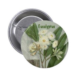 Eucalyptus button