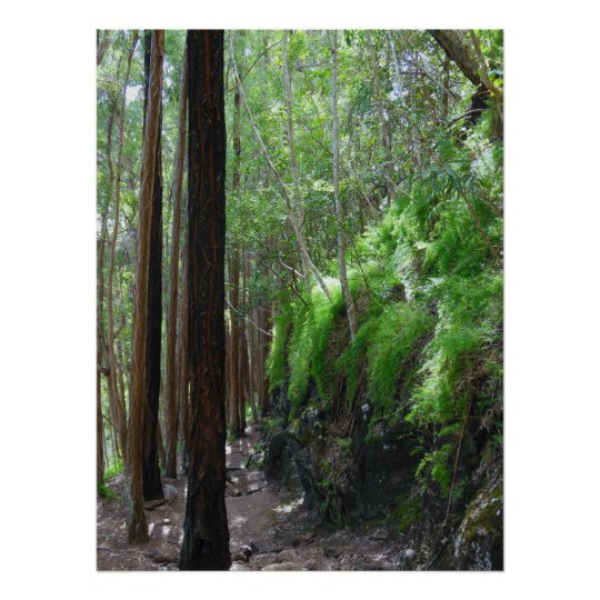 Eucalyptus Forest Trail Poster