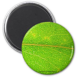 Eucalyptus Leaf Detail - Magnet