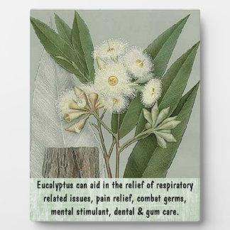 Eucalyptus plaque