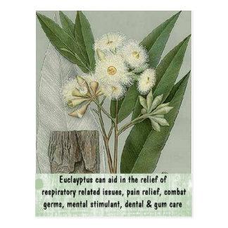 Eucalyptus postcard