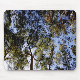 Eucalyptus Tree Canopy Mouse Pad