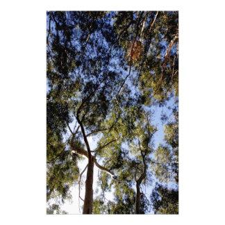 Eucalyptus Tree Canopy Stationery