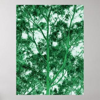 Eucalyptus Tree photo painting Poster