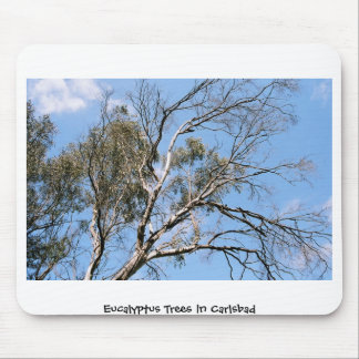 Eucalyptus Trees in Carlsbad Mouse Pad