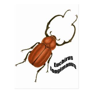 Euchirus longimanis postcard