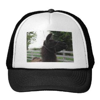 eugene trucker hat