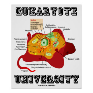 Eukaryote University (Animal Cell) Poster
