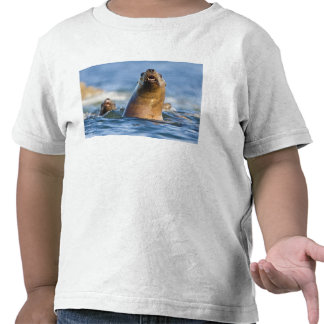 Eumetopias estelar agresivo de los leones marinos camiseta