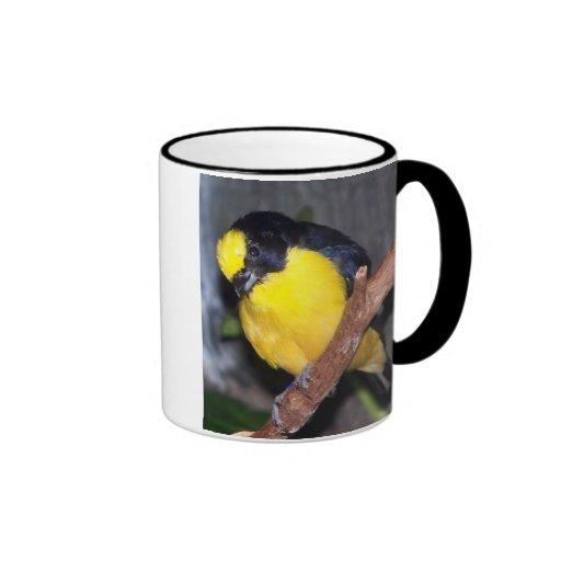 euphonia2 cargado en cuenta grueso tazas de café