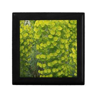 Euphorbia characias wulfenii jewelry box