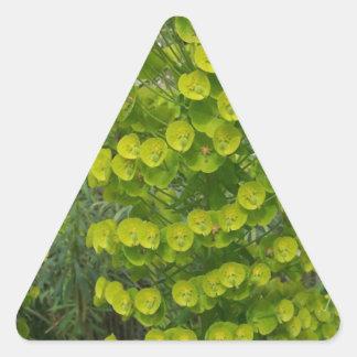 Euphorbia characias wulfenii triangle sticker