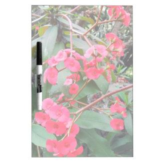 Euphorbia milii dry erase board