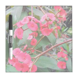 Euphorbia milii Dry-Erase board