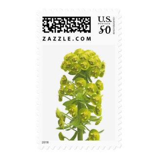 Euphorbia Postage