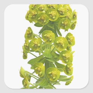 Euphorbia Stickers