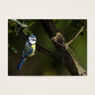 Eurasian blue tit, cyanistes caeruleus business card