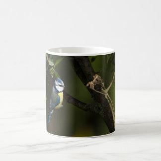 Eurasian blue tit, cyanistes caeruleus coffee mug