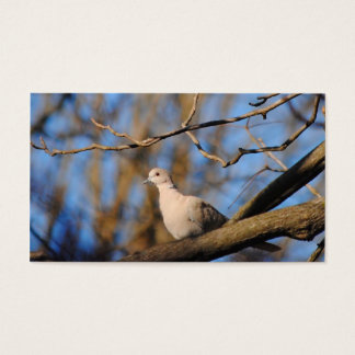 Eurasian Collared Dove Business Card