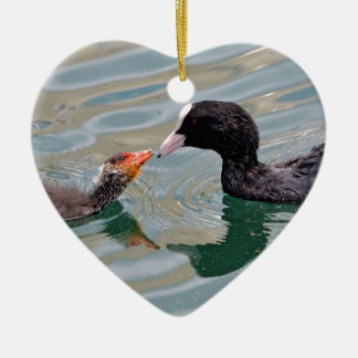Eurasian Coot and young Ceramic Ornament