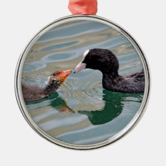Eurasian Coot and young Metal Ornament
