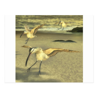 Eurasian Curlew Postcard