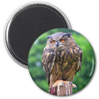 Eurasian Eagle Owl 2 Inch Round Magnet