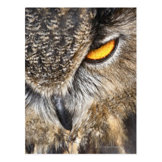 Eurasian Eagle Owl (Bubo bubo) Postcards