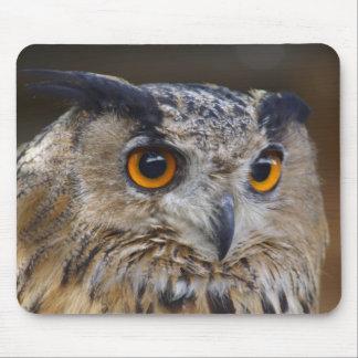 Eurasian Eagle Owl Mouse Pads