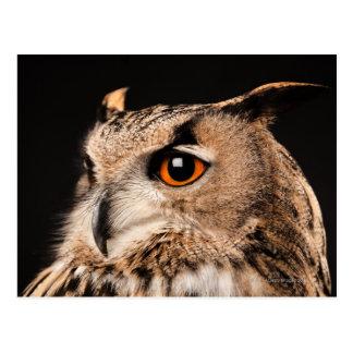 Eurasian Eagle Owl Postcard