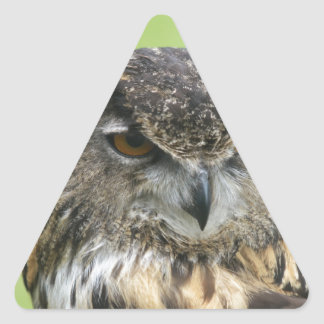 Eurasian Eagle Owl Triangle Sticker