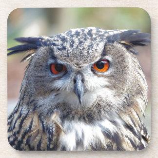 Eurasian Eagle-Owl, Uhu 2 Coaster
