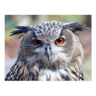 Eurasian Eagle-Owl, Uhu 2 Postcard